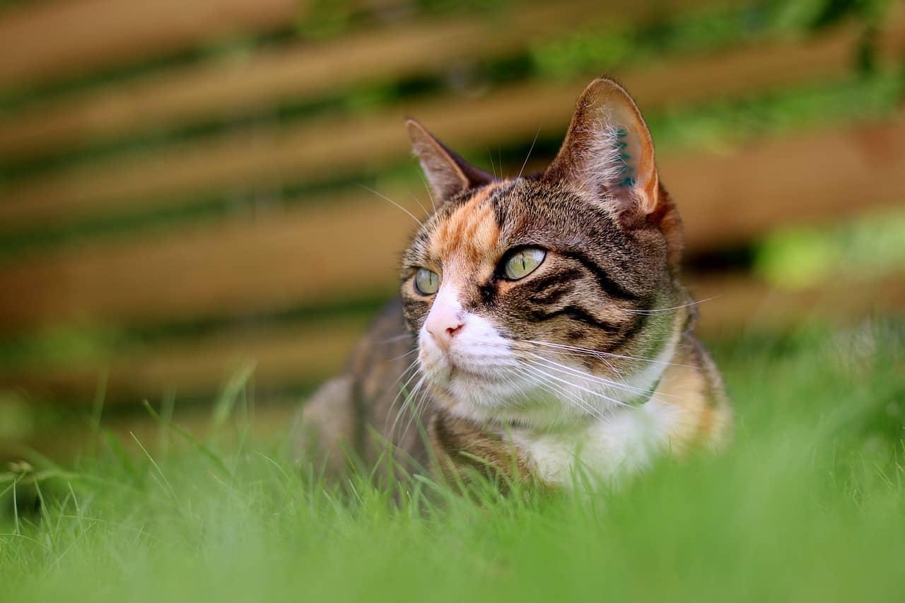 Comment choisir le meilleur harnais pour promener son chat ?