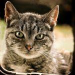 Comment apprendre au chat à utiliser une chatière ?