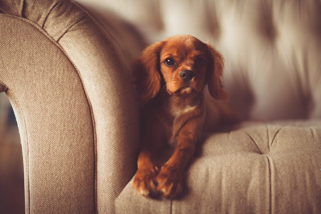 Comment empêcher son chien de manger les coins des meubles ?