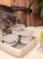Fontaine à eau - Pourquoi est-ce l'accessoire indispensable pour votre chat cet été?
