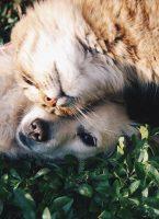 Soignez votre animal comme il se doit, sans vous ruiner