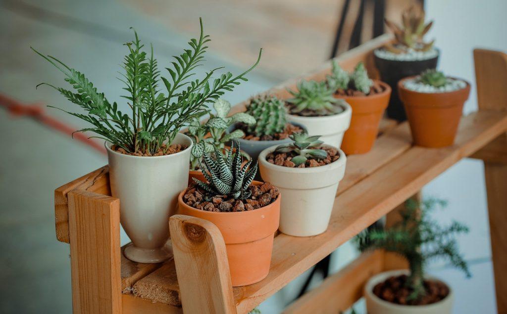Plusieurs pots de plantes sur étagère en bois