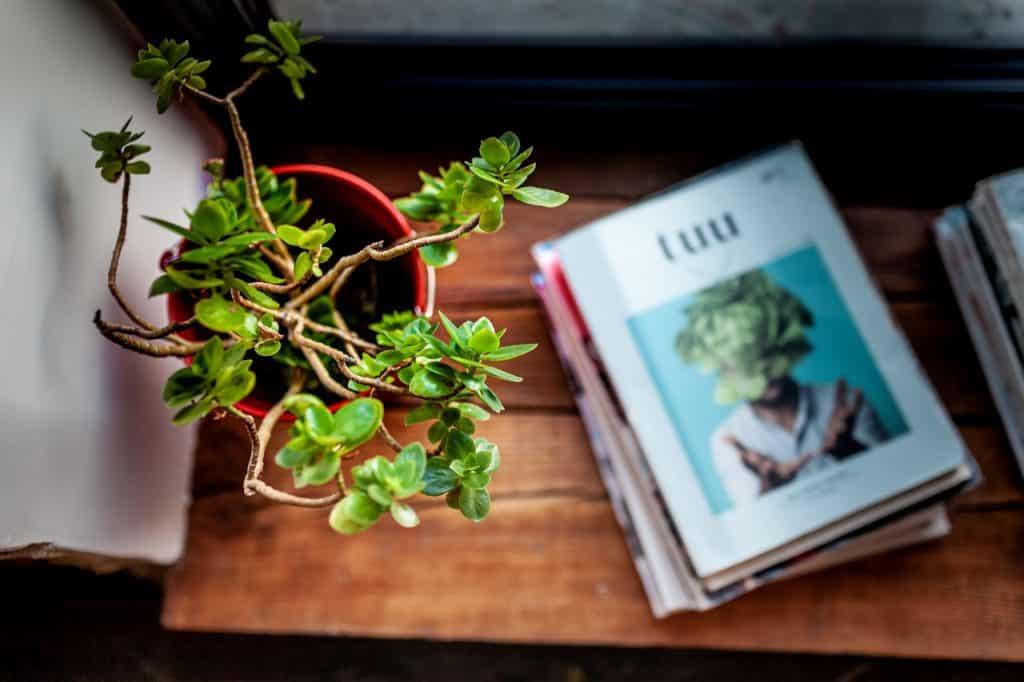 Plante verte à côté de magazine en bord de fenêtre